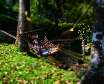 Misty Woods Resort | Image Gallery | Rest on Hammock