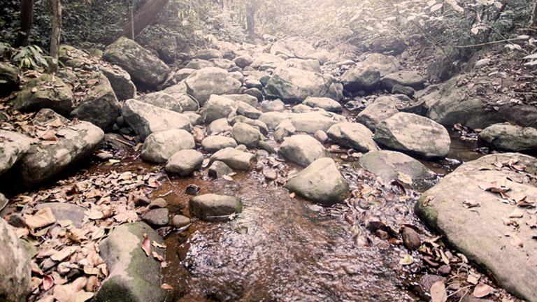 Misty Woods Resort | Activities | Trekking Pathway